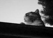 Mi vecino odia a mi gato, ¿qué hago?