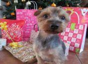 ¿Cuáles son los mejores regalos para mi mascota esta navidad?
