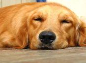 Perros ayudan a sanar a gente traumatizada tras matanza de Newtown