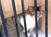 Animalistas salvan a más de mil gatos de ser vendidos como comida en China