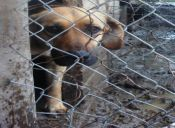 ¿Cómo se puede denunciar el maltrato animal?