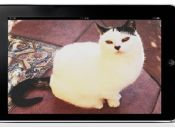 Friskies Hackathon: Crea un videojuego para tu gato