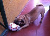 Animal entra a cancha de fútbol y muerde a dos jugadores