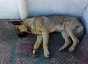 Las principales falencias de la Ley de Protección Animal