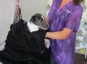 ¿Cómo reconocer a un buen veterinario?