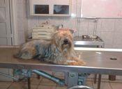 Esterilizaciones gratis de perros y gatos en Santiago