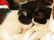 ¿Dormir o no dormir con nuestros gatos? Ese es el dilema