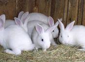 ¿Conejos agresivos?
