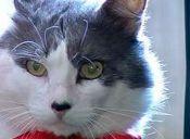 """La historia del  """"maloliente"""" gato Jemimo"""