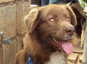 La historia del perro callejero más buscado de Valparaíso y que hoy vive en Seattle