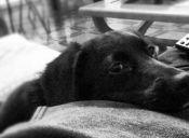 Cómo abordar la pérdida de una mascota