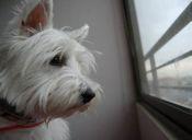Mascotas inseguras: ¿Qué hago?