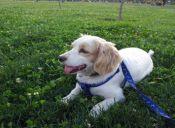 Rehabilitación canina