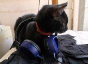 Música para perros y gatos