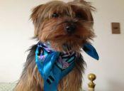 Mascotas fashionistas: ¿Excentricismo o una tendencia favorable?