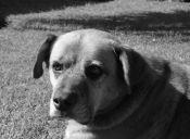 27 de julio: Día Oficial del Perro Callejero