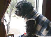 La contaminación ambiental también afecta a nuestras mascotas