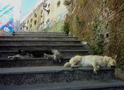 Nuevo programa de control y tenencia responsable de perros