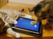 8 juegos para iPad que tu gato disfrutará