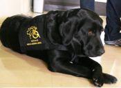 'Peseta' y los perros terapeutas