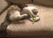 Juguetes top para gatos