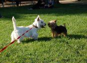 Tips para cruzar a tu perro