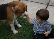 Amebas: ¡una amenaza para ti y tu mascota!