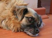 ¿Por qué algunas mascotas se presionan la cabeza?