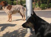 ¿Cómo saber si un perro tiene rabia?
