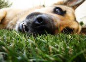 ¿Los perros tienen caries?