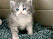 Rescate animal: Un adorable gatito viajero