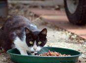 Lo que tu gato nunca debe comer
