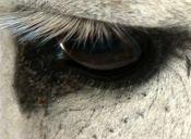¿Por qué lloran los animales?