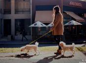 ¿Qué le puede ocurrir a mi perro si no lo saco a pasear a diario?