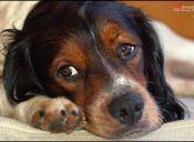 ¿Cómo cuidar la estitiquez de tu perro?