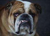 Cirugías plásticas para mascotas