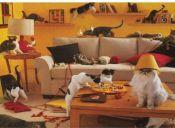 5 territorios del gato