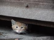 Depresión en animales, ¿por qué sucede?