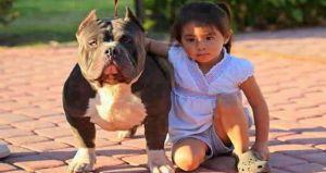 7 razas de perros que no son para niños