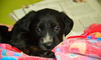 Consejos al traer un nuevo cachorro a casa