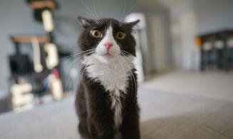 6 videos virales de gatos: ¡miau y a reír!