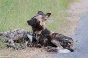 SAG trabajará con animalistas y productores ganaderos en tema de perros salvajes