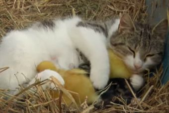 ¡Amigos por siempre!: video muestra las mejores amistades interespecies
