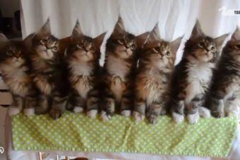 Video: Estos gatos si que saben bailar