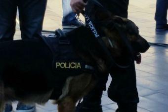 Perro de la policía española serán dados en adopción cuando jubilen
