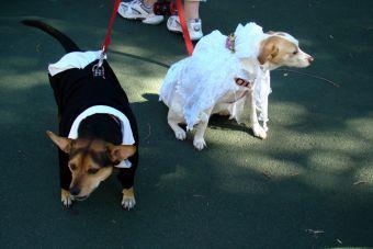 En China se realizó el primer matrimonio colectivo de perro
