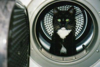 Video: Gatito runner usa tambor de lavadora como rueda para ejercitarse
