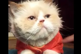 Video: gato baila como Michael jackson