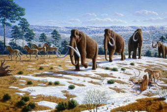 Ya tiene un hogar para los mamuts clonados