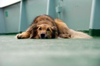 6 cosas que pueden intoxicar a tu perro